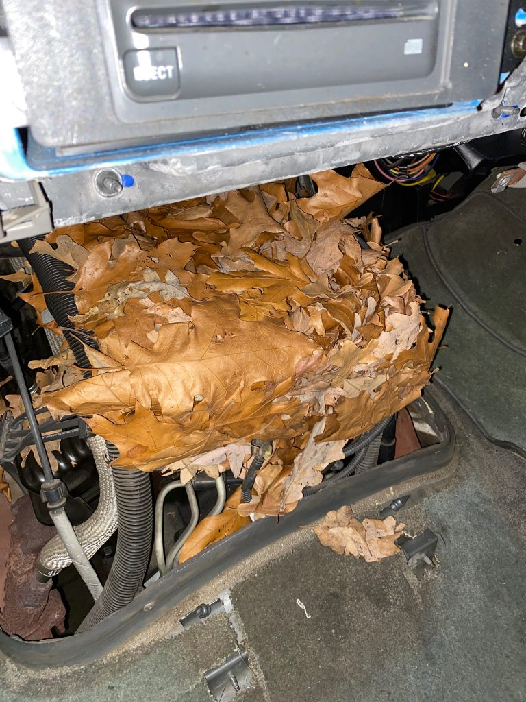 Mice-In-Vehicle-Transmission-Repair-Transmission-Replacement-Columbia-SC